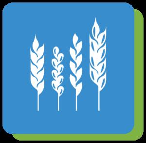 uprawy rolne